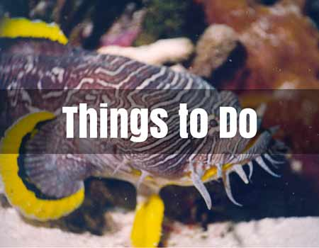 Things to Do Cozumel