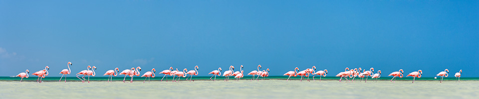 Pink Flamingos Holbox Mexico