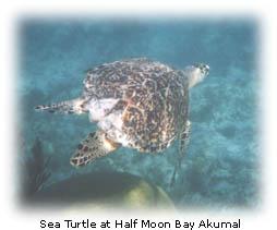 Half Moon Bay Akumal