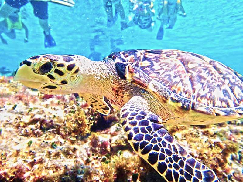 Cozumel Snorkeling Tour
