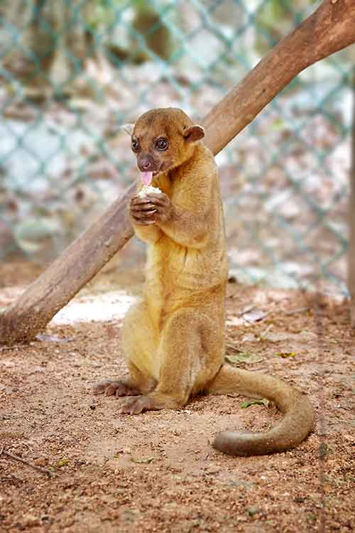 Aktun Chen Zoo